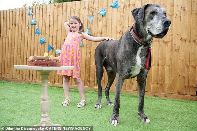 ATENCION: Muere a los 8 años y medio el perro más alto del mundo