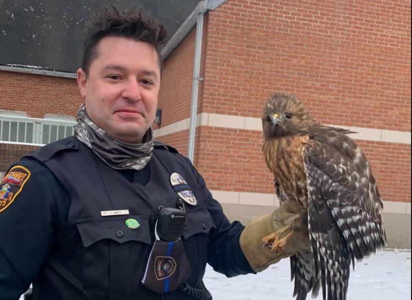 Guarde la policía ayuda a halcón herido