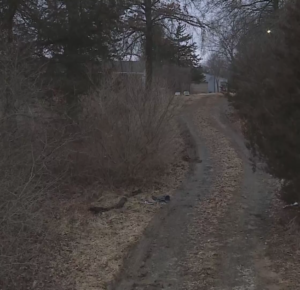 Los ladrones pasan junto a un hombre muerto para robar de su casa, dice la policía