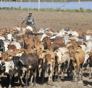 Ministerio de Agricultura y CEAGANA inician proyecto de producción ganadera