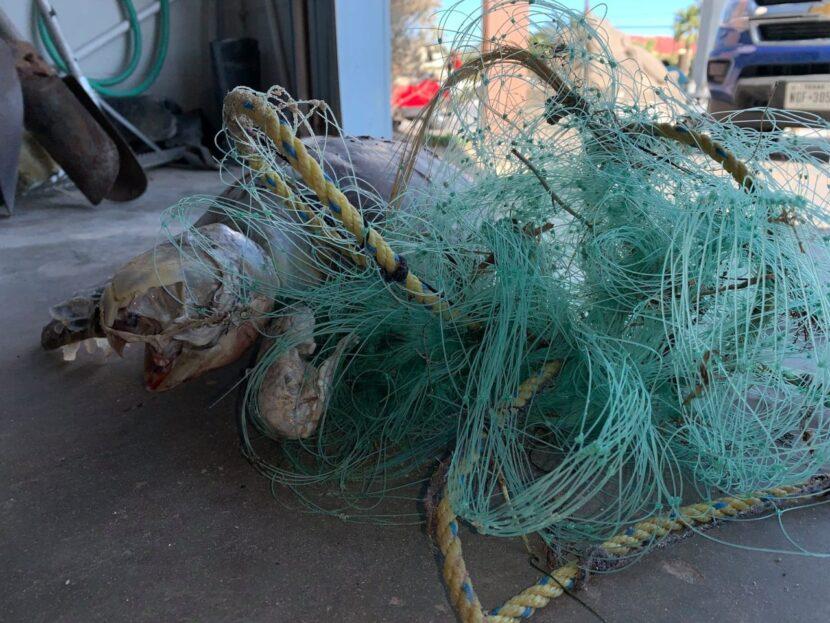 Redes de pesca ilegales matan tortugas marinas en aguas del sur de Texas cerca de la línea fronteriza marítima