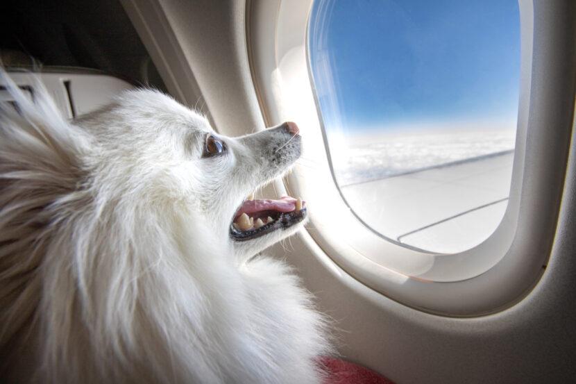 Southwest se une a otras aerolíneas para prohibir los animales de apoyo emocional