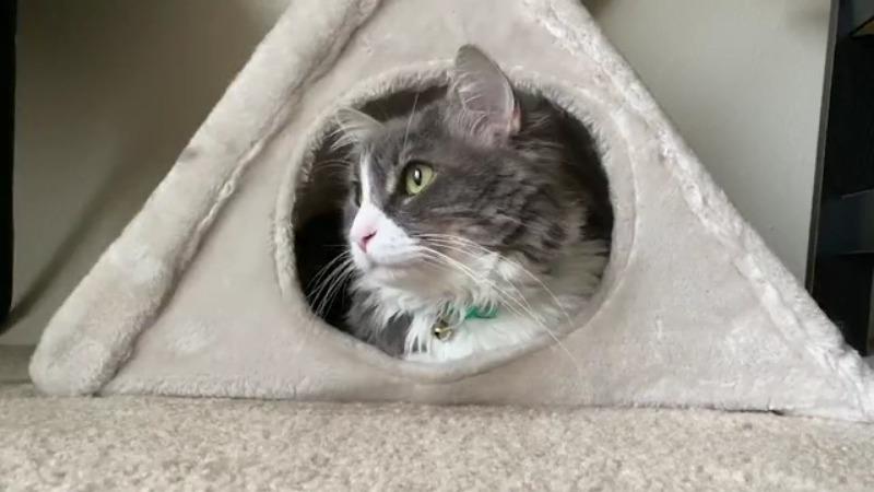 Un nuevo estudio sugiere que los gatos y los perros también pueden necesitar la vacuna COVID-19