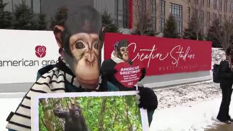 PETA protesta en American Greetings en Westlake por fotos de chimpancés