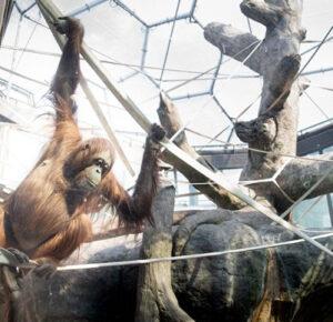RainForest del zoológico de Cleveland Metroparks reabrirá el 2 de marzo