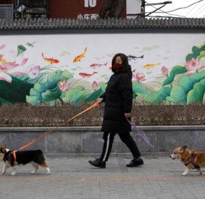 Casi 100 perros y gatos domésticos han contraído COVID-19. Cómo proteger a sus mascotas