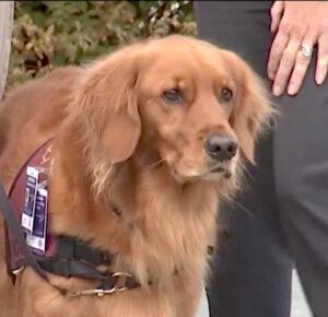 El congresista de Ohio quiere obtener ayuda para los veteranos con trastorno de estrés postraumático, reintroduciendo los perros de terapia de promoción de la ley