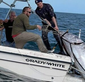 Padre e hijo pescan atún rojo de 1,000 libras frente a la costa de Carolina del Norte